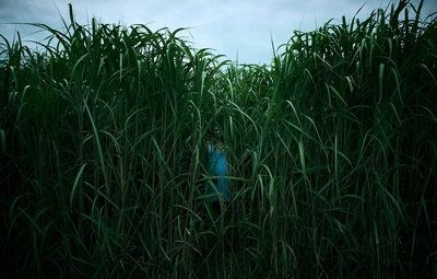 review film in the tall grass 2019